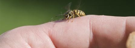 Insektenallergie