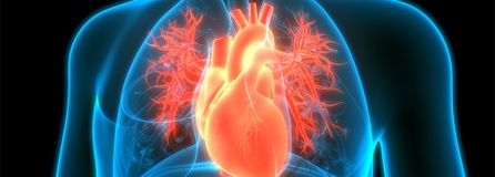koronare Herzkrankheit