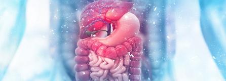 Magen- und Darmkrankheiten